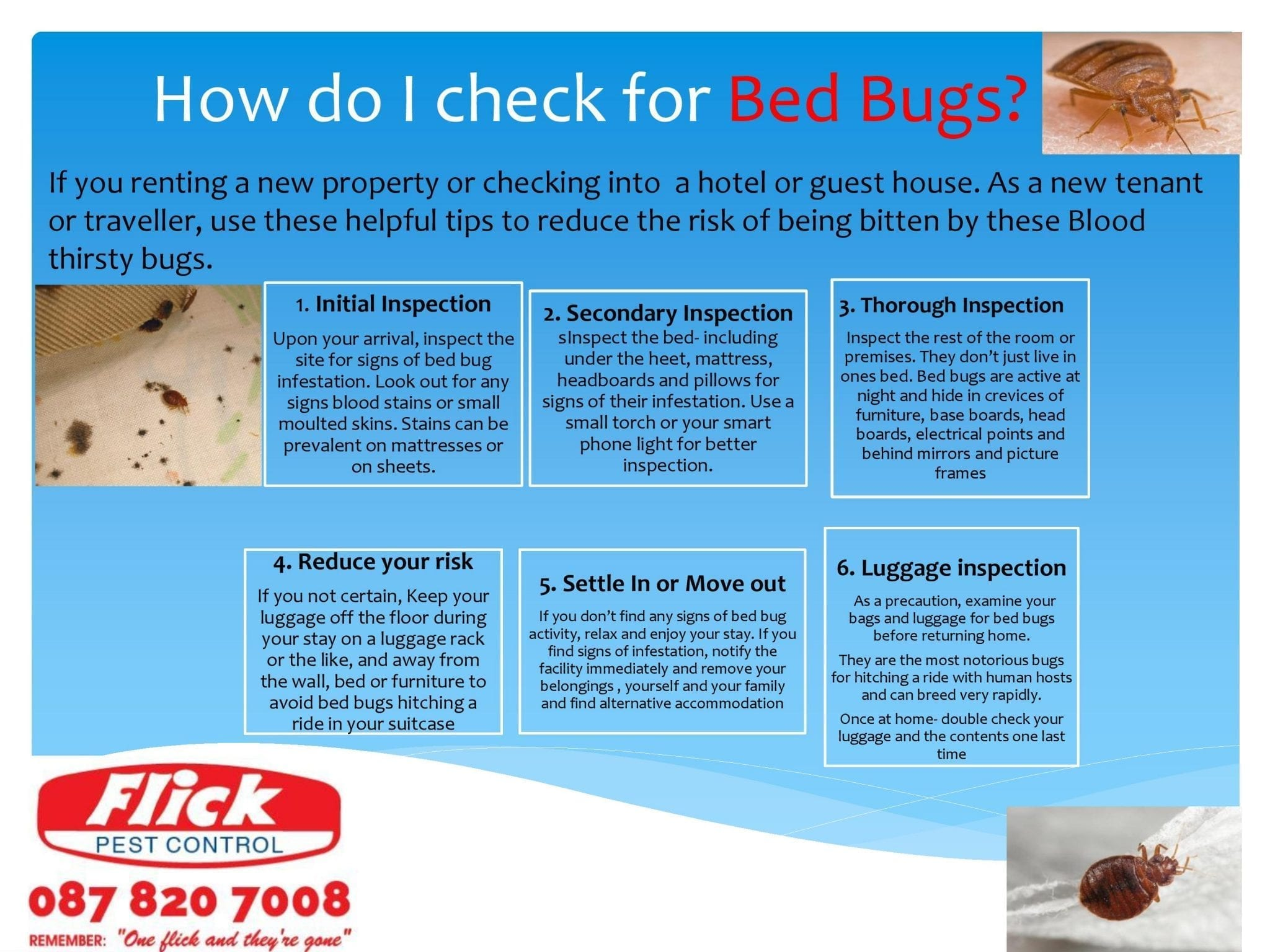 Bed Bugs How Do I Check For Bed Bugs Bug Blog Flick Pest